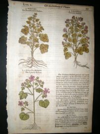 Gerards Herbal 1633 Hand Col Botanical Print. French & Spanish Mallow